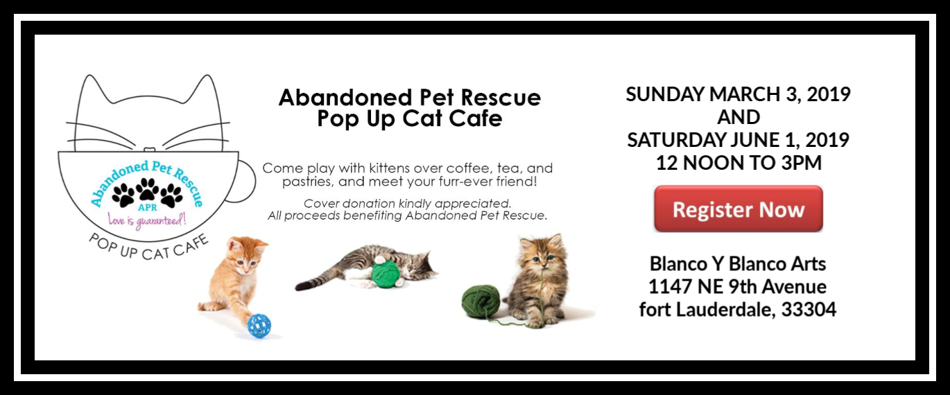 Pop Up Cat Cafe 3/3/19 @ Blanco Y Blanco Arts | Fort Lauderdale | Florida | United States