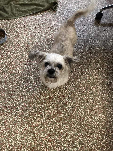 Adopt A Dog | Abandoned Pet Rescue